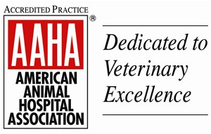 AAHA Veterinarian in Toronto, ON