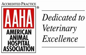AAHA Veterinarian in Toronto, ON