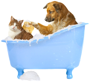 Cat and Dog Grooming in Toronto