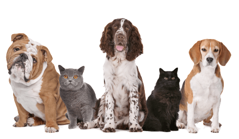 Group-Of-Cats-And-Dogs-_transparent